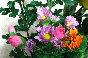 小菊とカーネーション