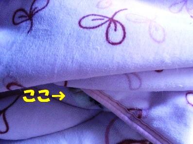 毛布に挟まってる子は?^^