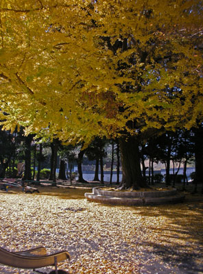 0912駿府公園2