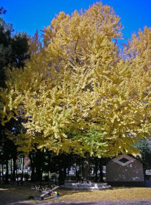 0912駿府公園4