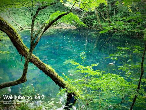 沸壷の池は青池より緑がかっている