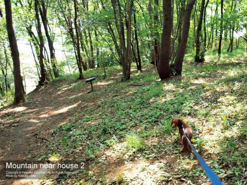 山中を犬と散歩