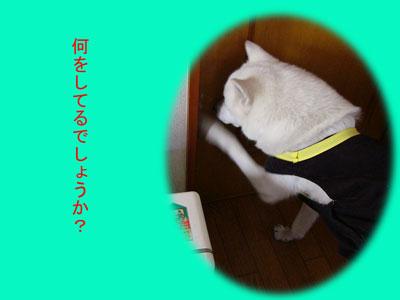 ブログ状況報告ー龍ー6-1