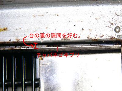 3.ゴキブリ(事例37)-4