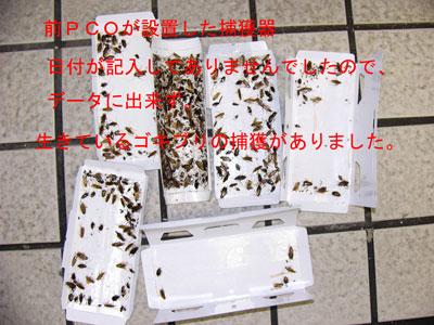 3.ゴキブリ(事例37)-5