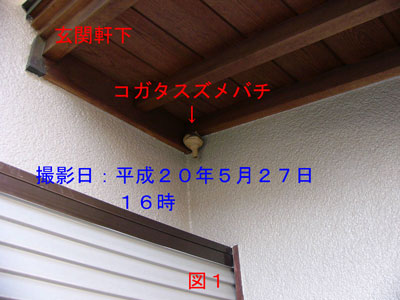 ハチ駆除編初期巣-1