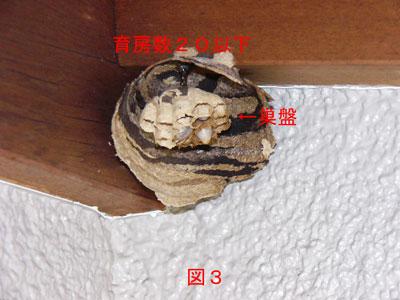 ハチ駆除編初期巣-3