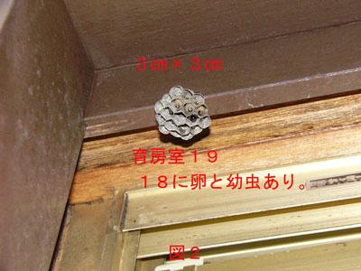 ハチ駆除編初期巣-5
