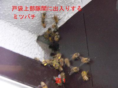 1.ハチ駆除事例33-1