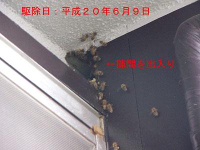 1.ハチ駆除事例33-4