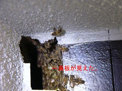 1.ハチ駆除事例33-5