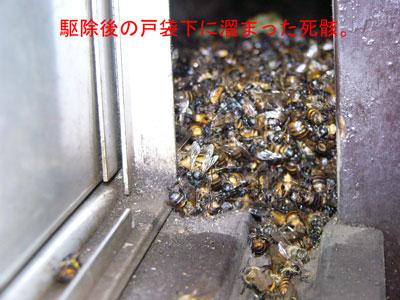1.ハチ駆除事例33-7