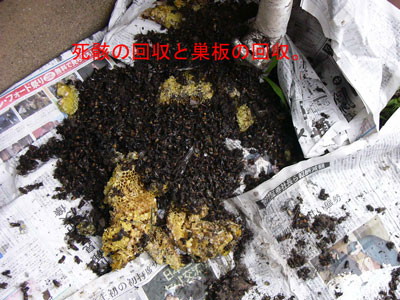 1.ハチ駆除事例33-8