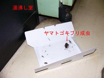 3.ゴキブリ駆除事例38-2