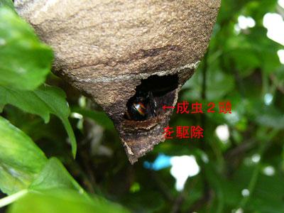 ハチ写真集34-3