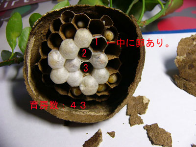 ハチ写真集34-4
