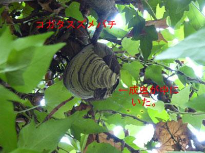 ハチ写真集37-2
