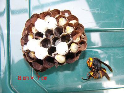 ハチ写真集37-3
