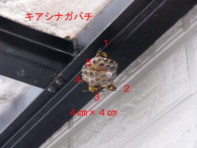 ハチ写真集38-1