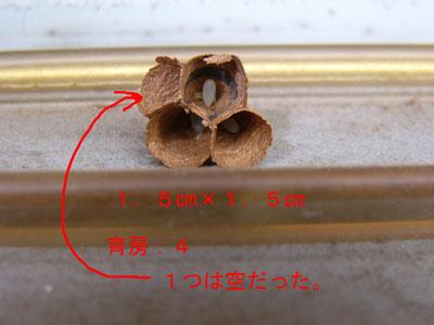 ハチ写真集39-3