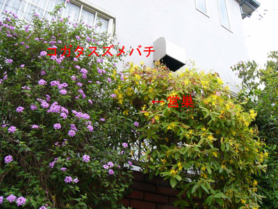 ハチ写真集40-1-1