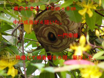 ハチ写真集40-2