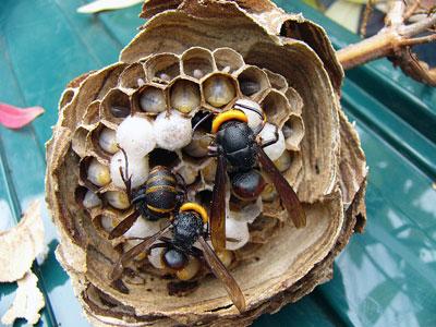 ハチ写真集40-3