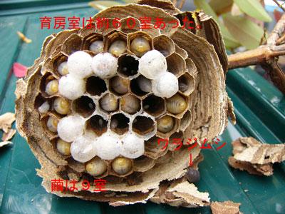 ハチ写真集40-4