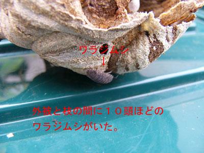 ハチ写真集40-6