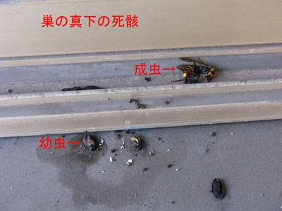 1.ハチ駆除事例34-1-3