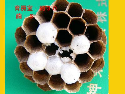 1.ハチ駆除事例34-1-4