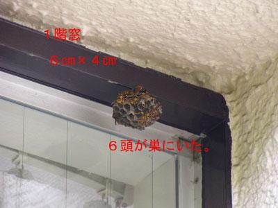 ハチ写真集41-1