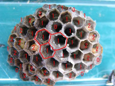 ハチ写真集41-2