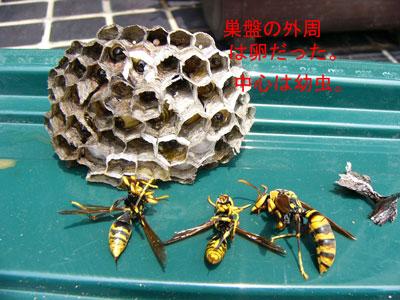 ハチ写真集41-4