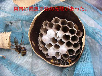 ハチ写真集42-3