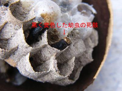 ハチ写真集42-4
