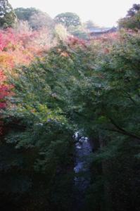 2008・京都・秋 (1)