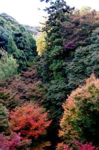 2008・京都・秋 (4)
