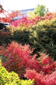 2008・京都・秋 (10)