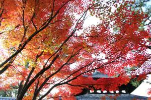 2008・京都・秋 (14)