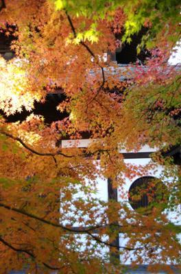 2008・京都・秋 (15)