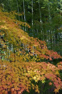 2008・京都・秋 (16)