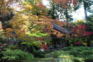 2008・京都・秋 (17)