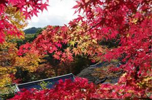 2008・京都・秋 (18)