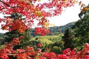 2008・京都・秋 (20)
