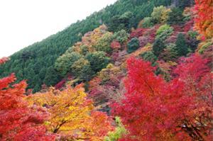 2008・京都・秋 (23)