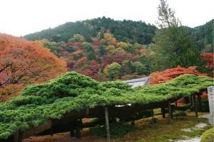 2008・京都・秋 (24)