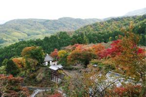 2008・京都・秋 (26)