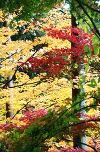 2008・京都・秋 (27)