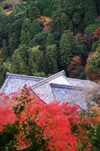 2008・京都・秋 (28)